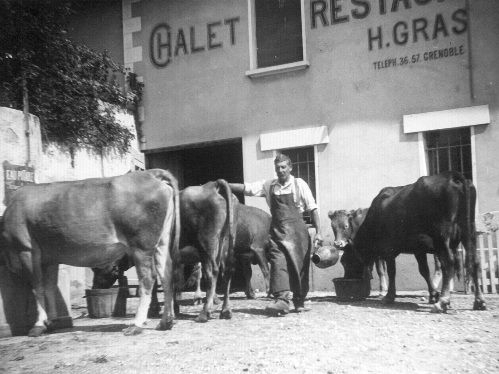 Le retour des Vaches Chez le Per'Gras